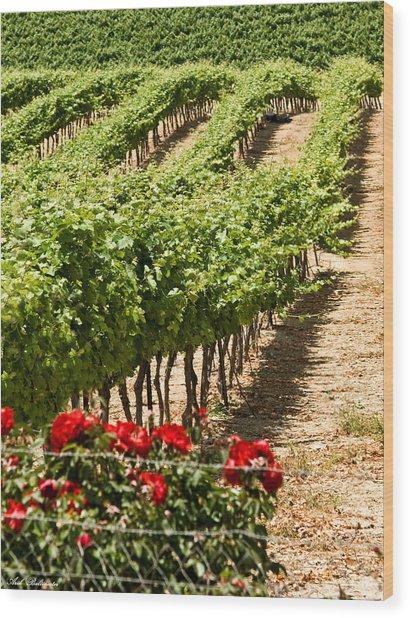 Vineyards In The Galilee  4 Wood Print by Arik Baltinester