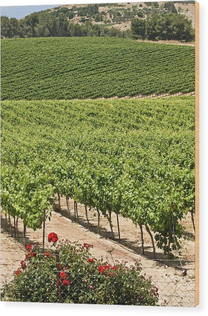 Vineyards In The Galilee Wood Print by Arik Baltinester