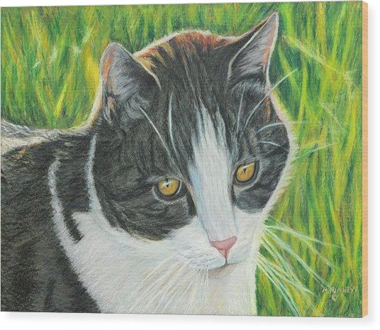 Vinny In Late Afternoon Wood Print by Angela Finney