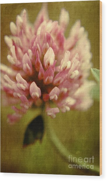 Vintage Clover Wood Print