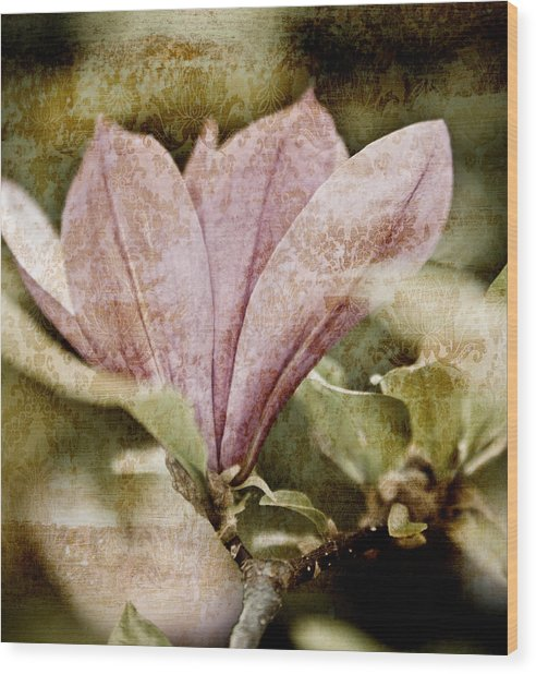 Vintage Magnolia Wood Print by Frank Tschakert