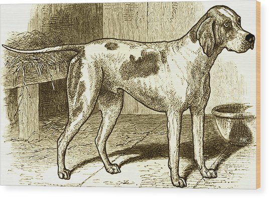 Vintage Sepia German Shorthaired Pointer Wood Print