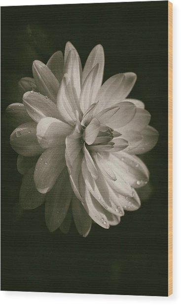 Vintage Velvet  Wood Print