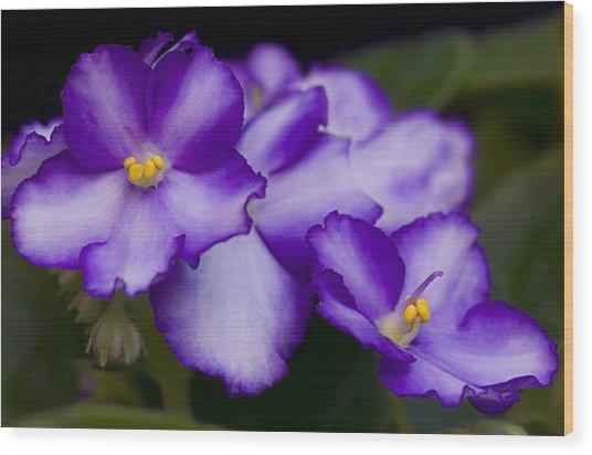 Violet Dreams Wood Print