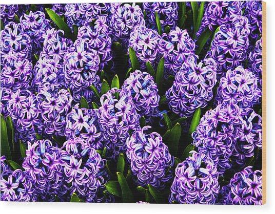 Violet Hyacinth Wood Print