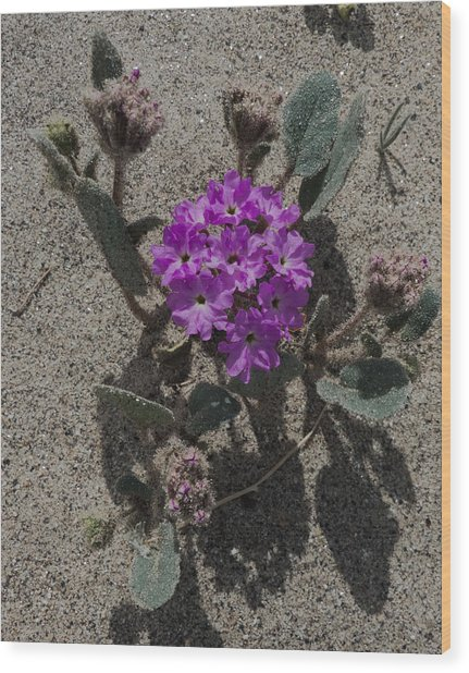 Violets In The Sand Wood Print