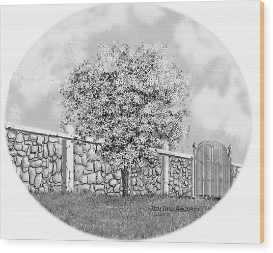 Virginia-dogwood Wood Print