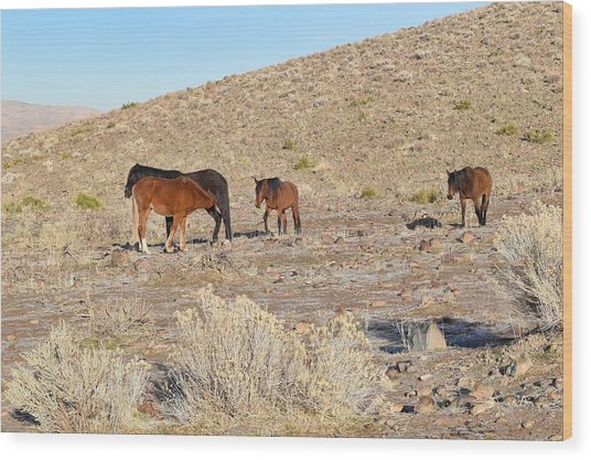 Virginia Range Mustangs Wood Print