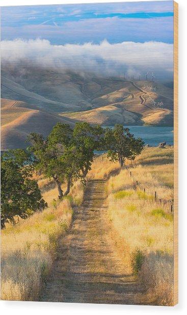 Vista Grande Trail At Sunrise Wood Print