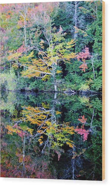 Vivid Fall Reflection Wood Print