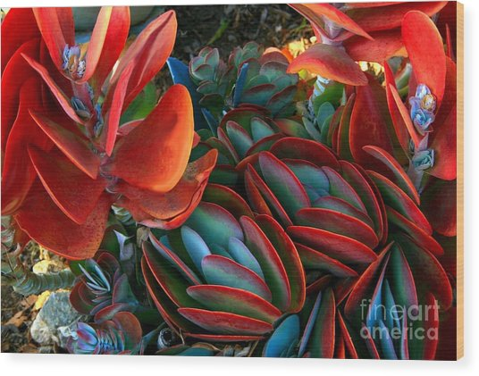 Vivid Paddle-leaf Succulent Wood Print