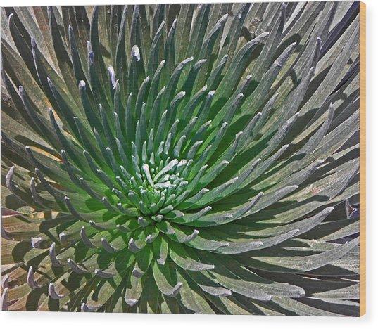 Volcanic Beauty I Wood Print by Elizabeth Hoskinson
