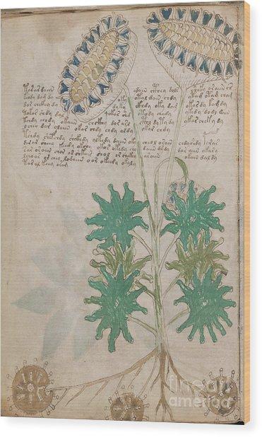 Voynich Flora 04 Wood Print
