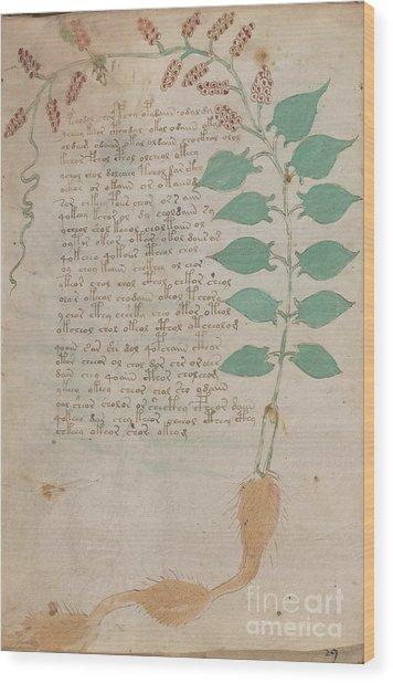 Voynich Flora 07 Wood Print