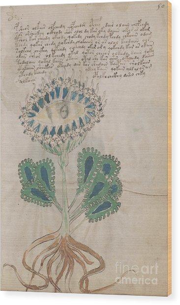 Voynich Flora 11 Wood Print