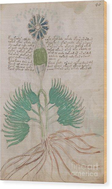 Voynich Flora 16 Wood Print