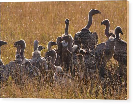 Vultures Wood Print by Paco Feria