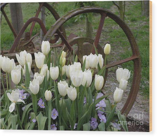 Wagon Wheel Tulips Wood Print