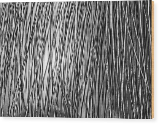 Waiting For The Sun Bw Wood Print