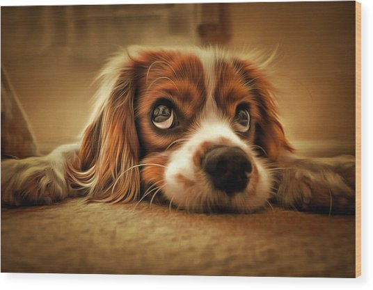 Waiting Pup Wood Print