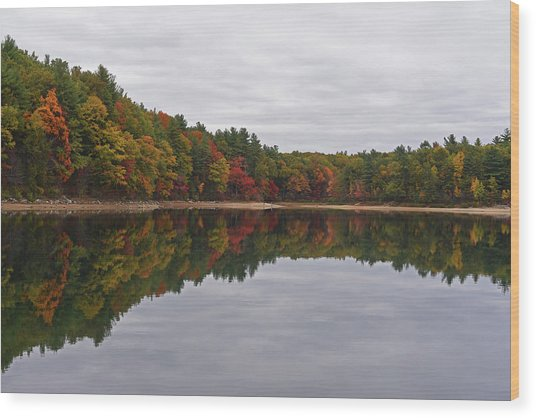 Walden Pond Fall Foliage Concord Ma Reflection Trees Wood Print