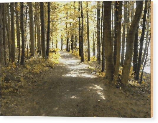 Walk In The Woods Wood Print