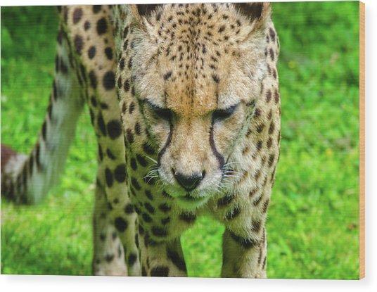 Walking Cheeta Wood Print