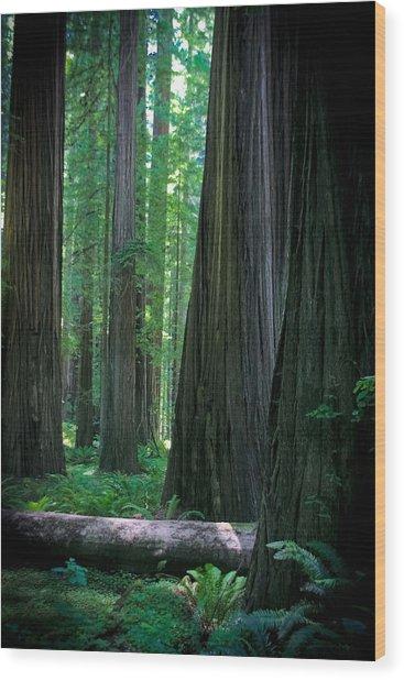 Walking In The Redwoods Wood Print by Jonathan Hansen