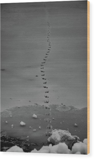 Walking On Thin Ice Wood Print