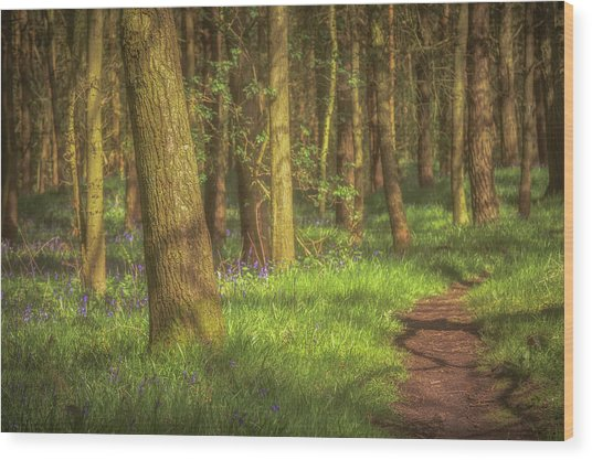 Walking Through The Bluebell Wood Wood Print