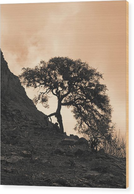 Walking Tree Wood Print