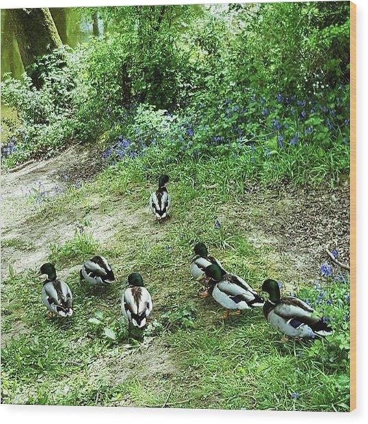 #walks #woodland #wildlife #cute Wood Print by Natalie Anne