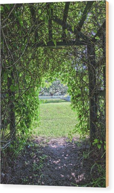 Walkway From Greenhouse Wood Print