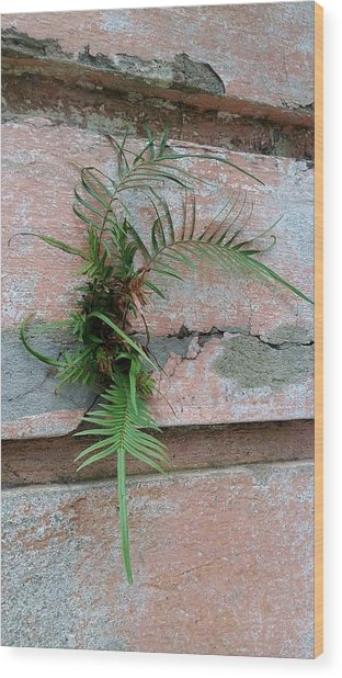 Wall Fern Wood Print