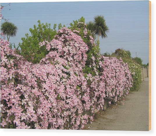 Wall Of Beauty In Ireland Wood Print by Jeanette Oberholtzer