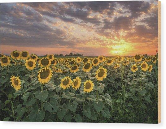 Wall Of Sunflowers Wood Print