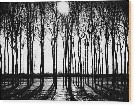 Walnut Grove Fall Evening Wood Print