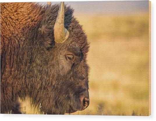 Warm Bison Wood Print