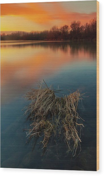 Wood Print featuring the photograph Warm Evening by Davor Zerjav