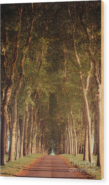 Warm French Tree Lined Country Lane Wood Print