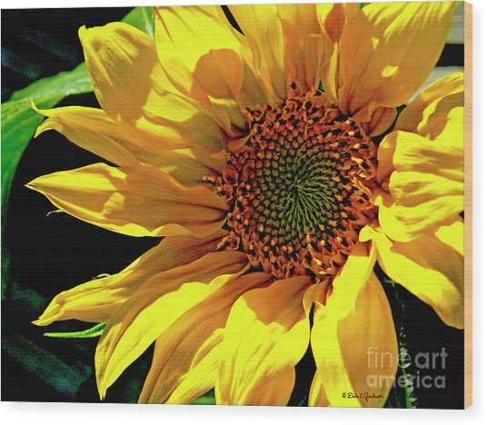 Warm Welcoming Sunflower Wood Print