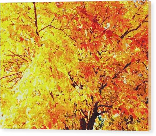 Warmth Of Fall Wood Print