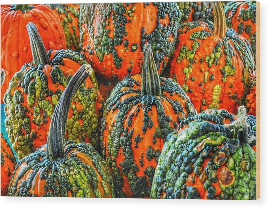 Warty Pumkins  Wood Print