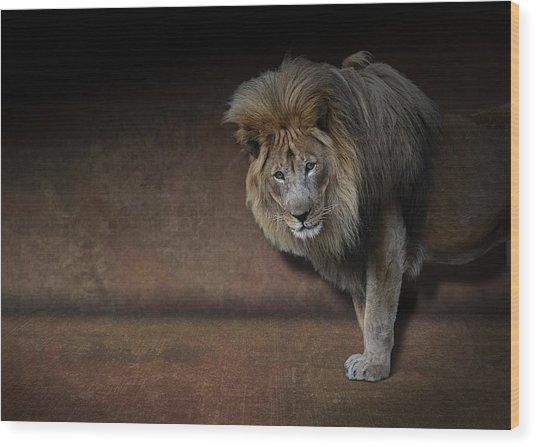 Was That My Cue? - Lion On Stage Wood Print
