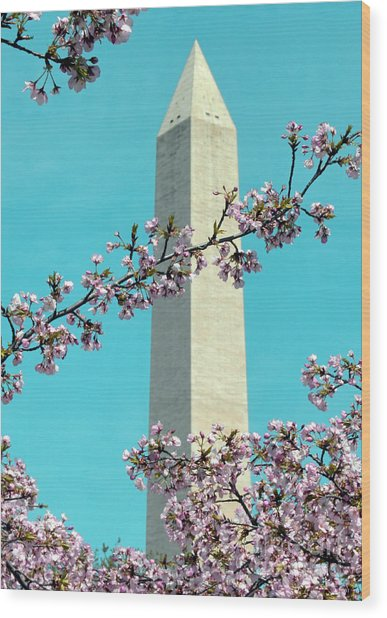 Washington D.c. In Springtime 2 Wood Print