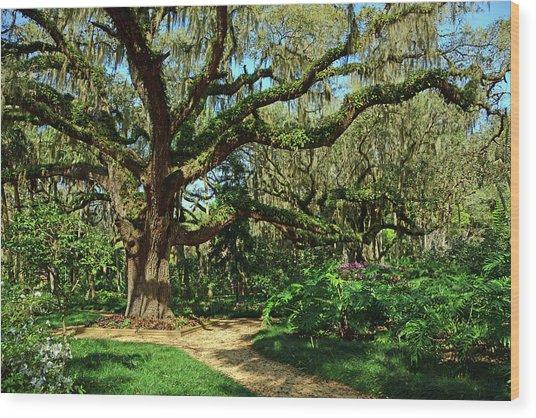 Washington Oaks Gardens Wood Print