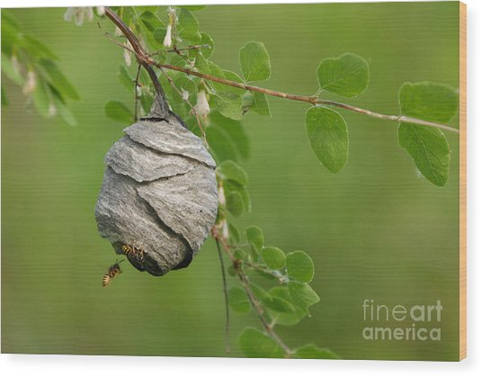 Wasp Wood Print by Dennis Hammer