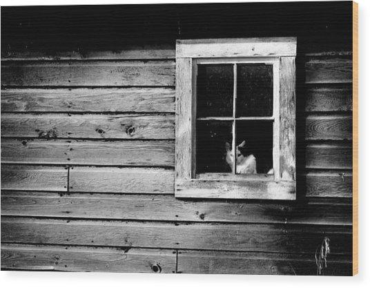 Watch Cat Wood Print