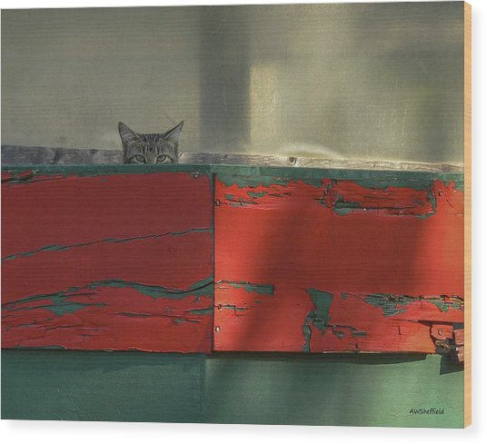 Watchful Cat Wood Print