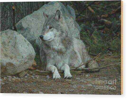 Watchful Wolf Wood Print